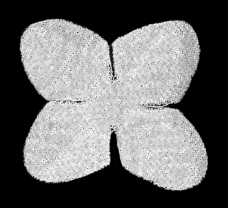 PETALS FROM EB5007 - IVORY